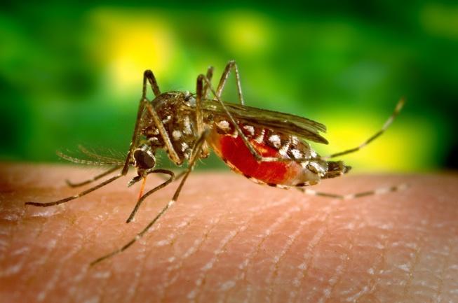 EduPalu - Une application made in Congo pour lutter contre le paludisme