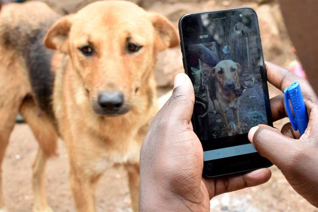Tanzanie: des chercheurs utilisent une application pour lutter contre la rage