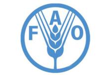 Afrique : la FAO lance une application mobile pour en savoir plus sur les poissons que nous mangeons