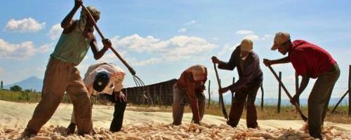 Les agriculteurs éthiopiens disposent d'une ligne de téléassistance
