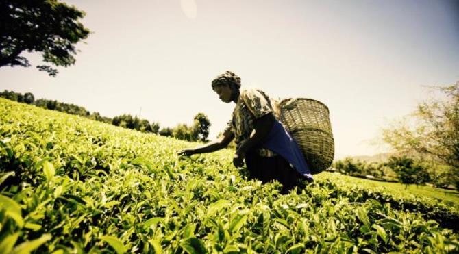 Mastercard lance une place de marché mobile pour les agriculteurs