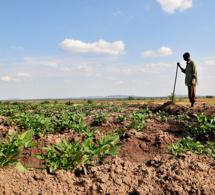 Un portail internet mis en place par l'ONU afin d'aider l'Afrique à s'adapter au changement climatique